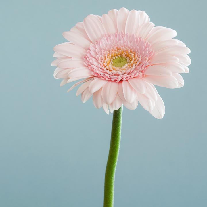 フラワーネイルで春らしいデザインを紹介&4月に見頃を迎えるお花をご紹介します♡
