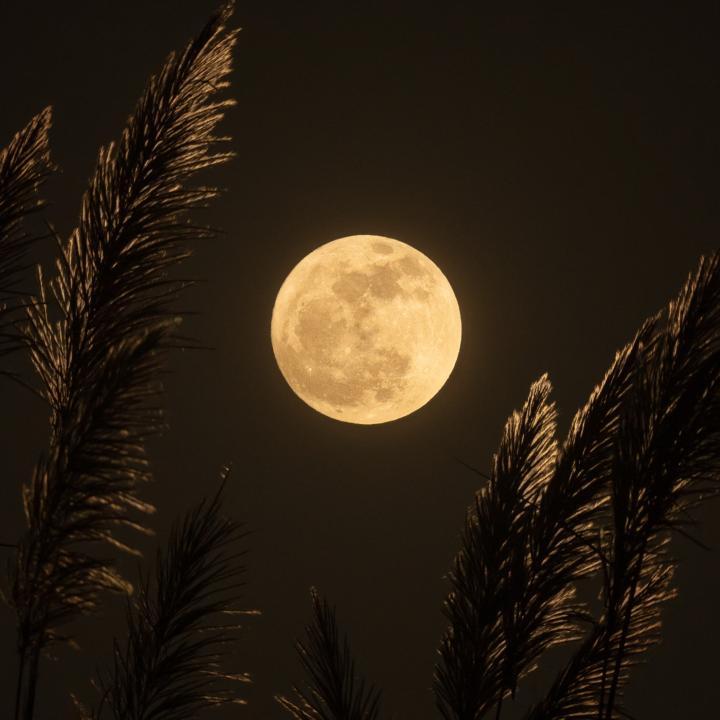 月のネイルをシンプルに取り入れる方法は?月のパワーで癒しとダイエットをゲット!